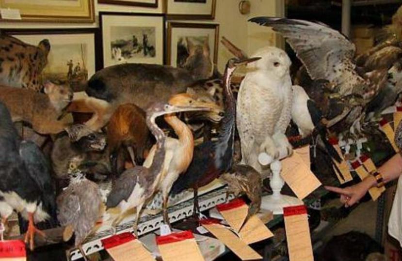 Commerce illicite d animaux sauvages saisie de 6000 for Habitat rural en algerie pdf